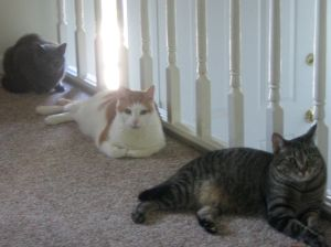 Three cats in a neat row.