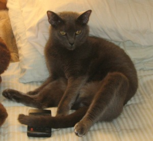 Scornful cat with remote control