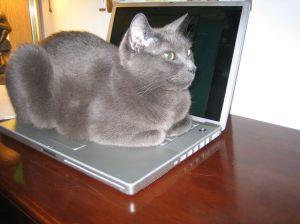 Gray cat sleeping on open laptop computer
