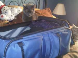 Cats and suitcase